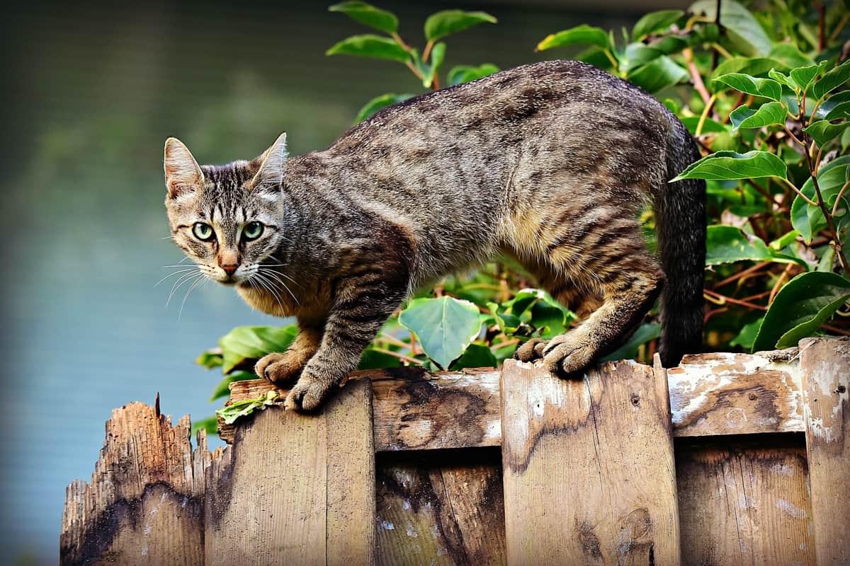تفسير رؤية القطط في المنام للعزباء والخوف منها - حب مصر